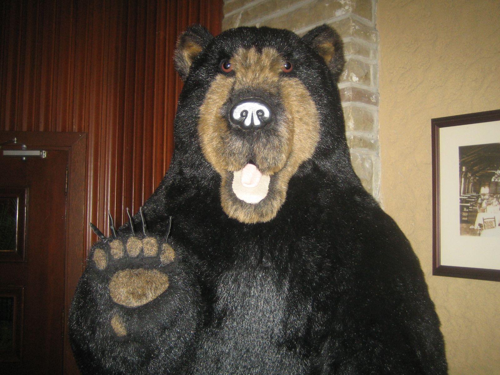 Freundlich: Der Banff-Bär